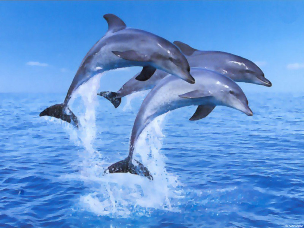 Three dolphins in ocean